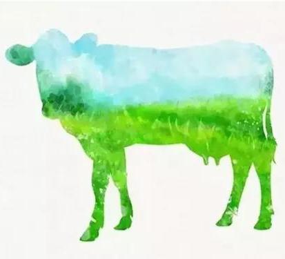 大自然最珍贵的礼物 — 牛初乳